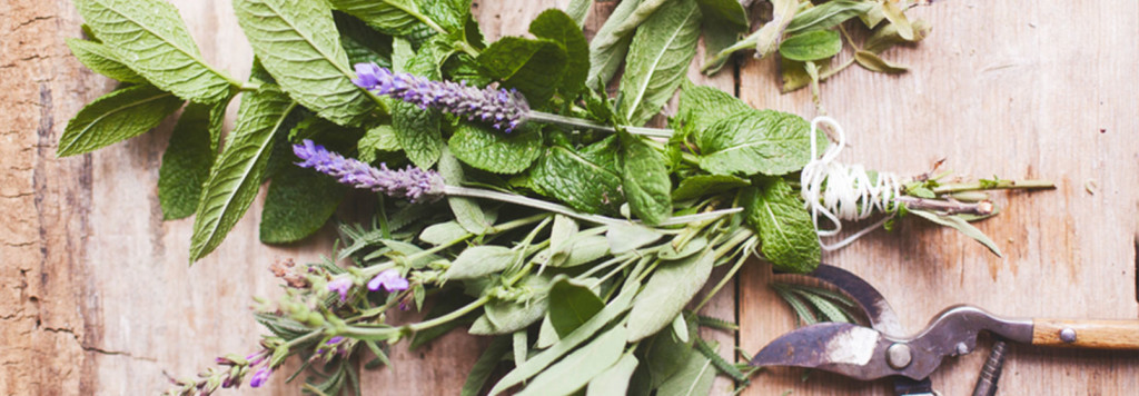 aromatherapy_herbs