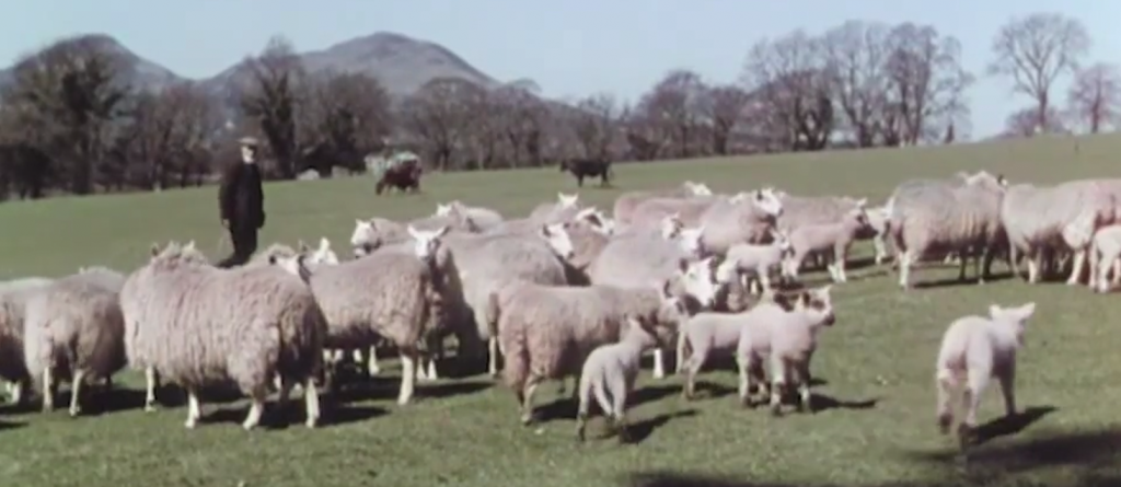 scottish wool industry