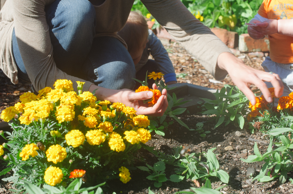 foraging marigolds