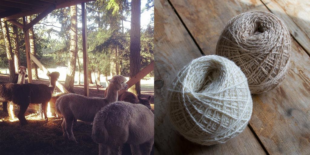 hinterland_farm_yarn_4