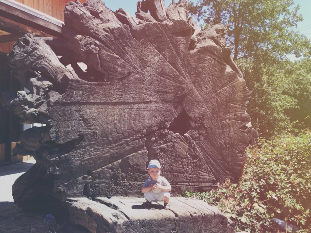 coltrane redwoods