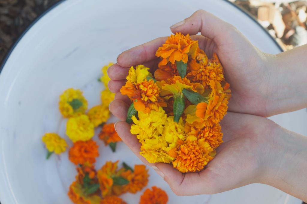 marigold natural dye